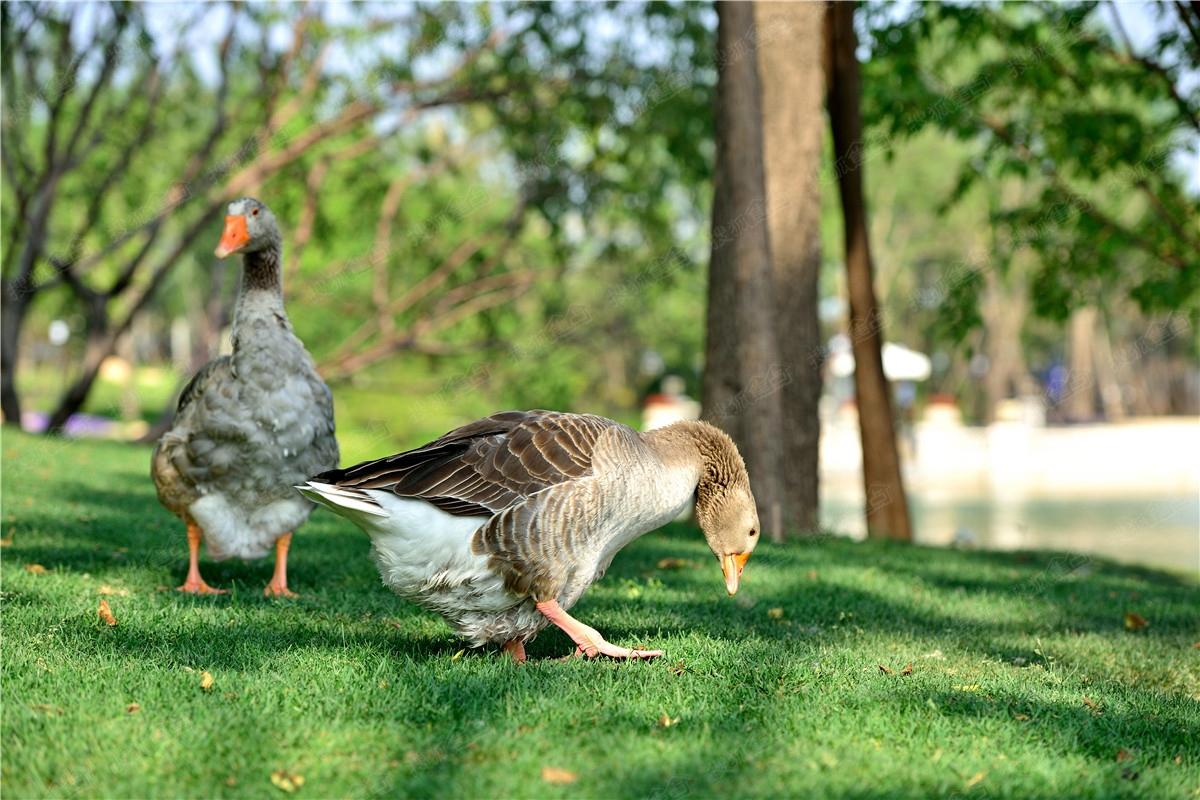 壁纸 动物 鸟 鸟类 1200_800